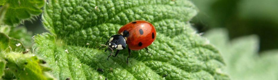 insecten weren met horren