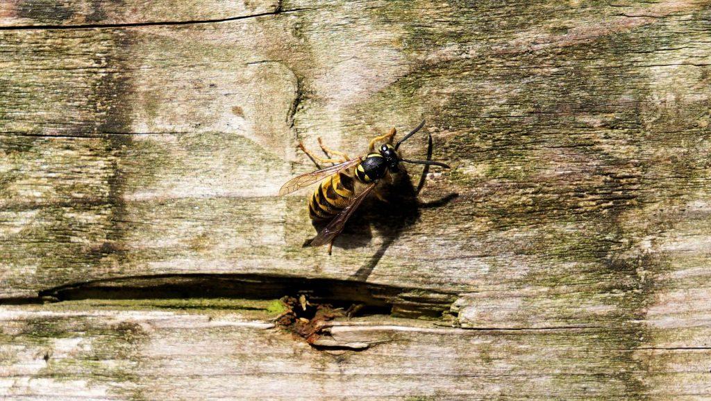 Wespen buiten houden door horren