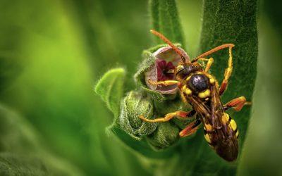 wespennest herkennen